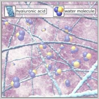 Hyaluronic-Acid-LOS FUNDAMENTALES – ÁCIDO-HIALURÓNICO