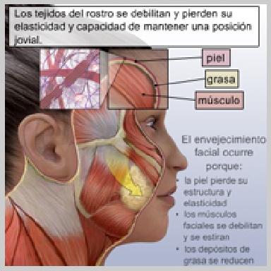 Lifting-Facial-Part-Media-ANATOMÍA-FACIAL